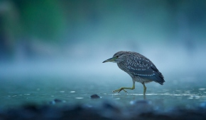 Fot. Adam Mańka